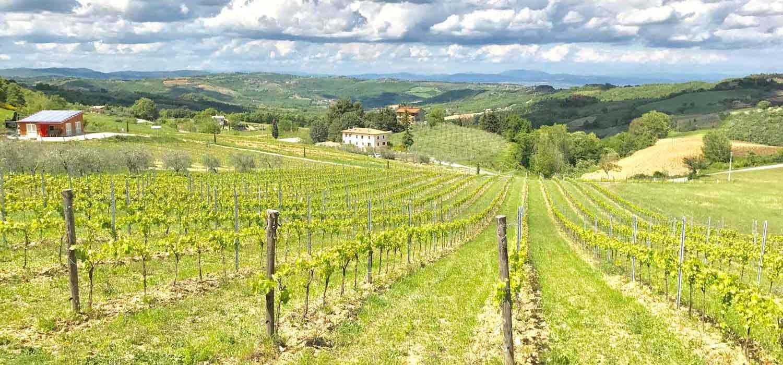 Iacopo-Paolucci-vigna-panorama